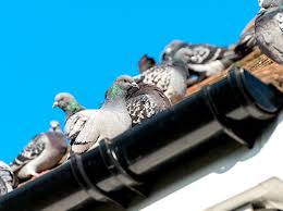 Pigeon Prevention and Deterrent Tips